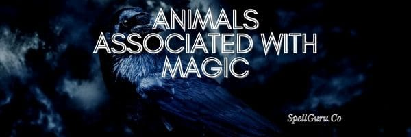 Animals Associated With Magic