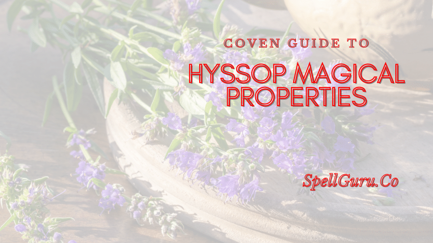 Hyssop Magical Properties