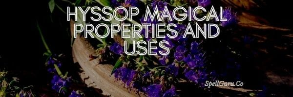 Hyssop Magical Properties and Uses