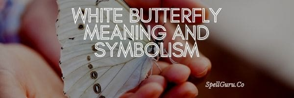 White Butterfly Meaning and Symbolism